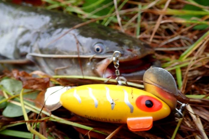 春のナマズの釣り方を解説します!トップに拘らず色んなルアーを使ってみよう