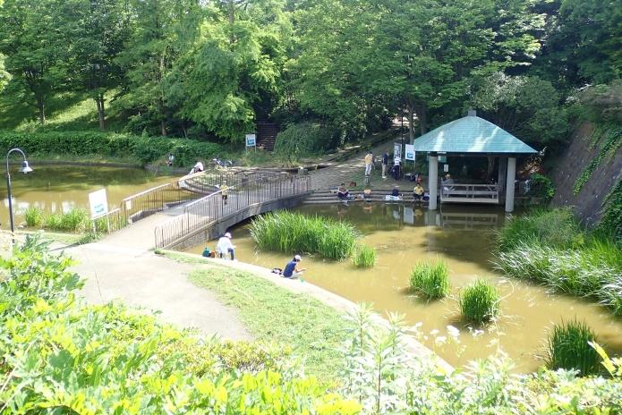 【都会で魚釣り】横浜市内の山崎公園をご紹介!なんとタナゴが釣れますよ!