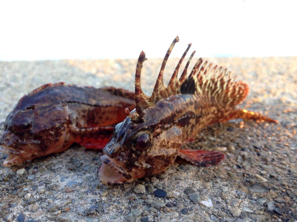 釣りや魚捕りに潜む海の危険7選!元海上保安官から見て危ない行動と対処法