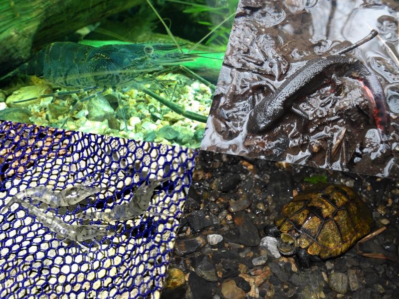メダカと一緒に飼える魚・エビ・貝15種類!混泳しやすい生き物の特徴