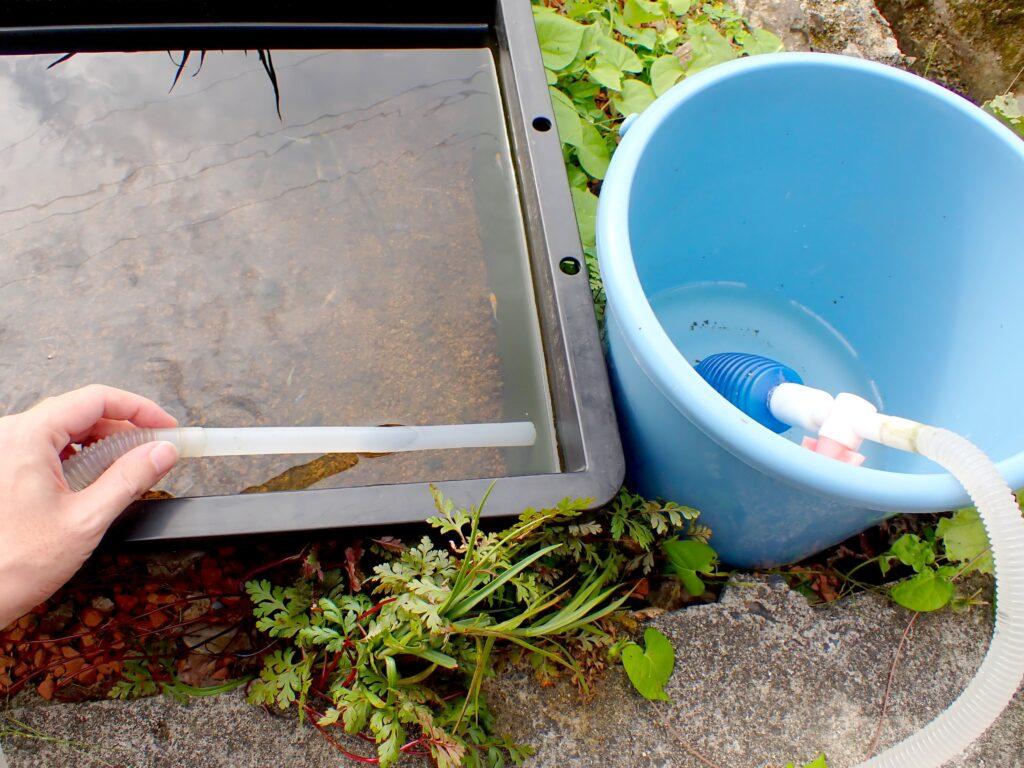 メダカの水換えは1ヶ月に何回がベスト?理想の水換え方法と頻度・水量を解説!